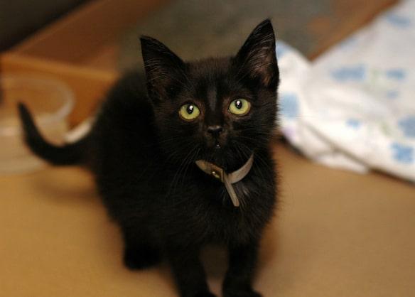черный котенок с зелеными глазами