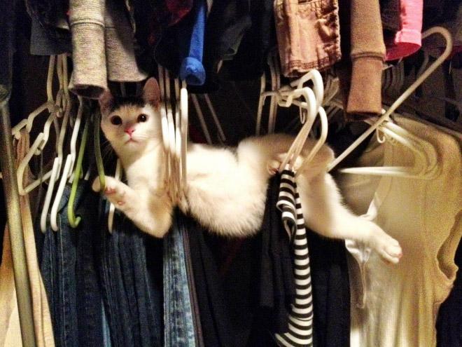 кот застрял в вешалках