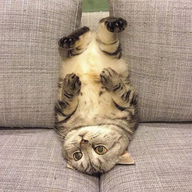 полосатый кот на диване