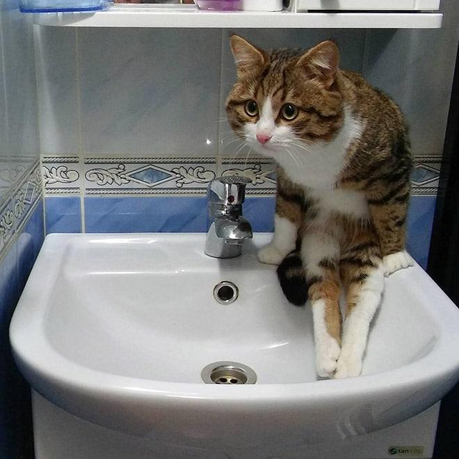 полосатый кот сидит на раковине