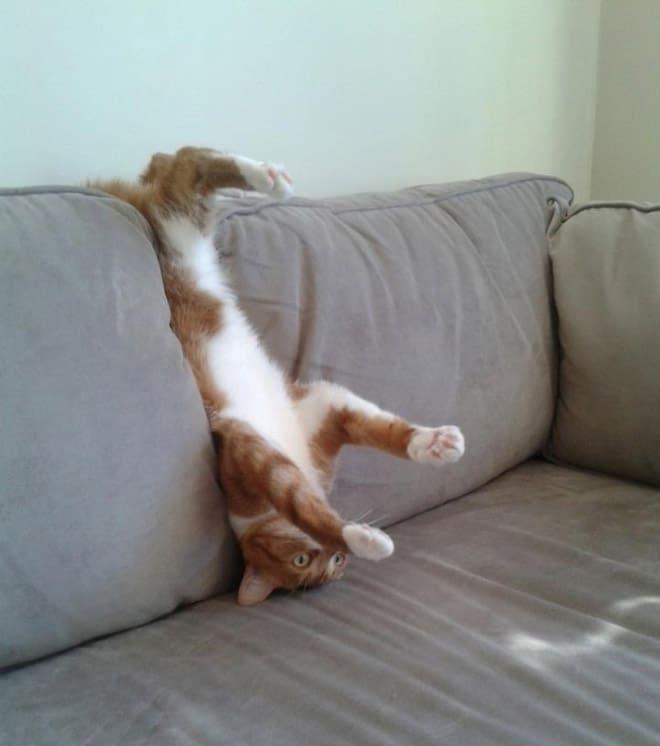 бело-рыжий кот вверх ногами на диване