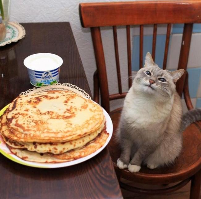 кот и тарелка с блинами