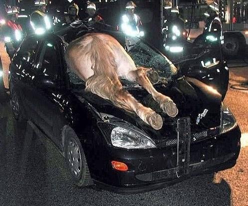 конь в автомобиле
