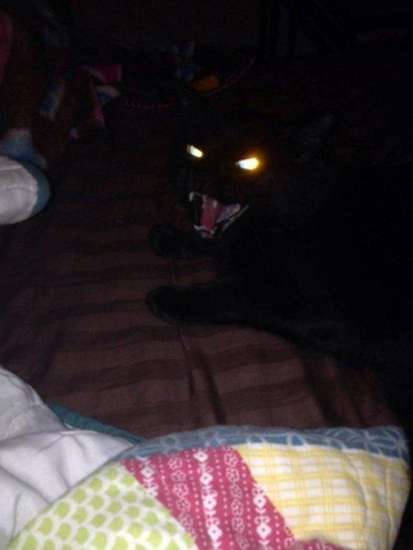 черный кот шипит
