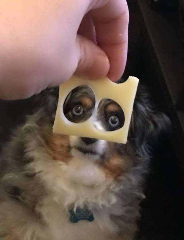 собака и кусочек сыра в руке