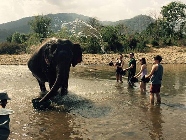 слон и вода