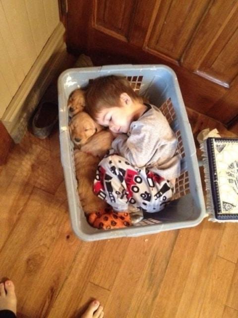 мальчик спит со щенками