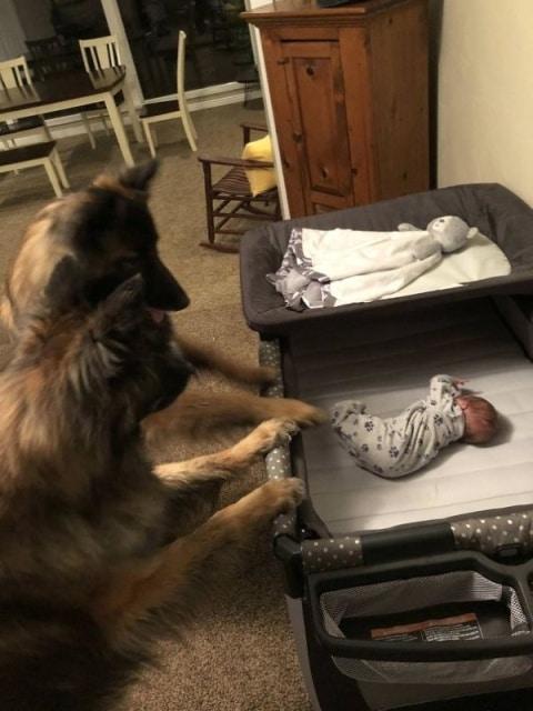 две собаки и младенец