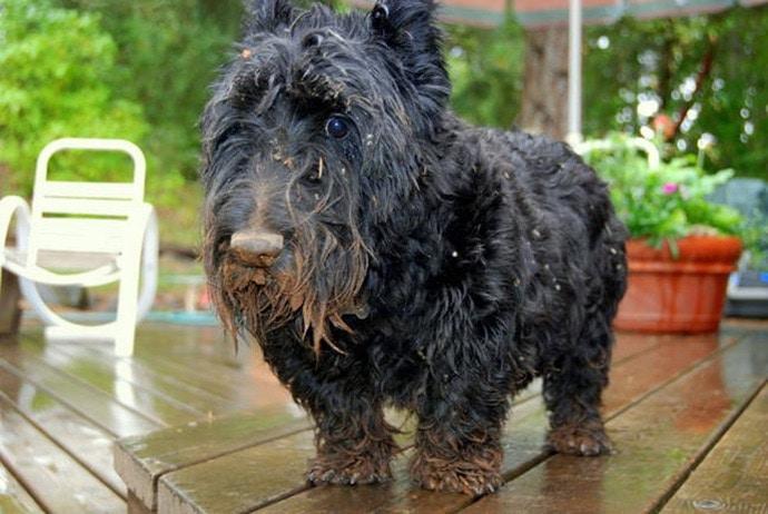 черная собака в грязи