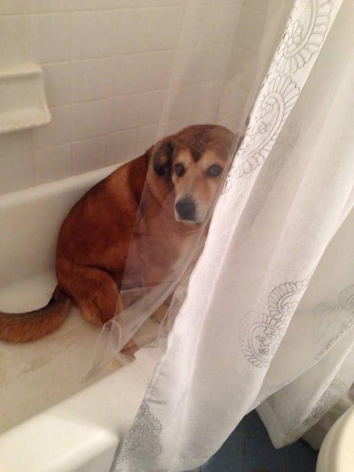 рыжая собака в ванне