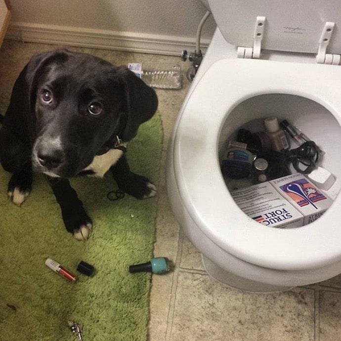черная собака сидит рядом с унитазом