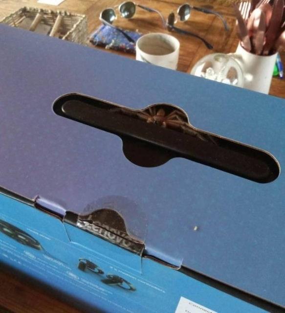 паук в коробке