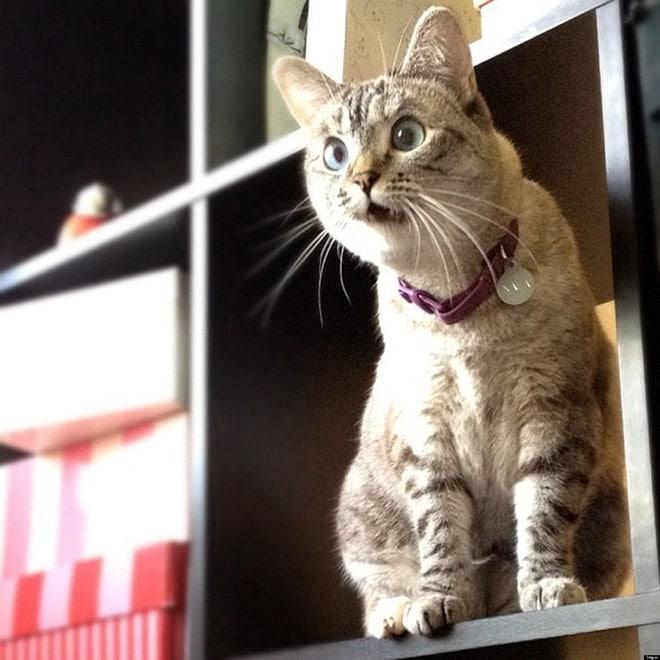 кот удивленно смотрит в сторону