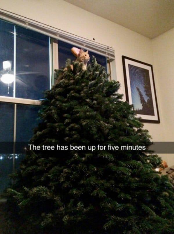 рыжий кот на елке