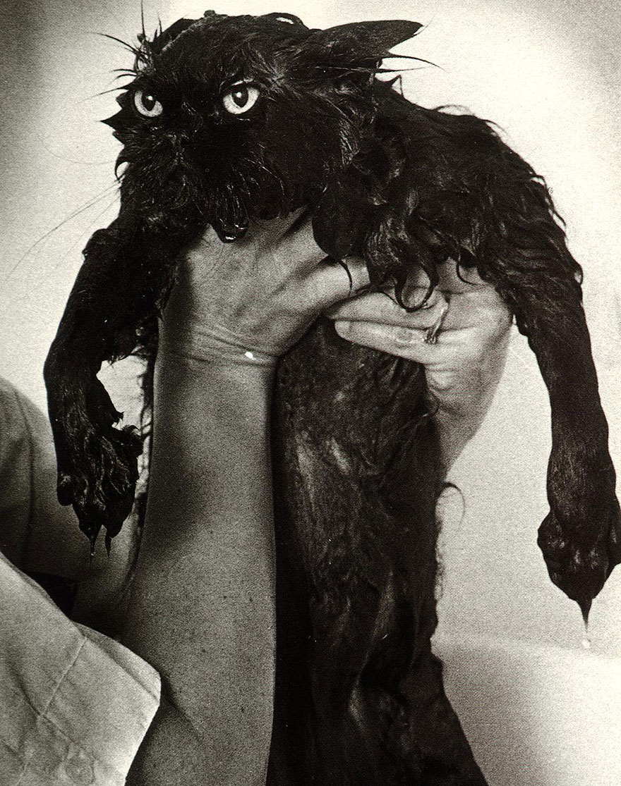 мокрый черный кот на руках