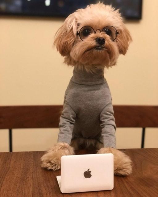 пес в очках