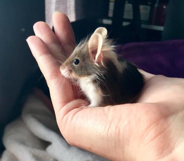мышка на ладони