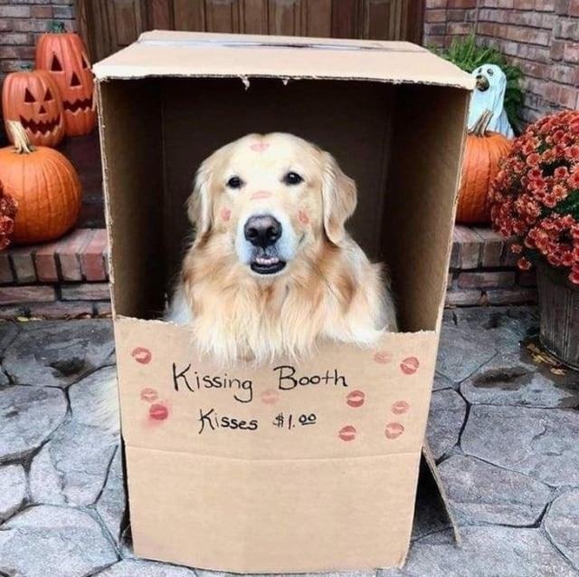 пес в коробке