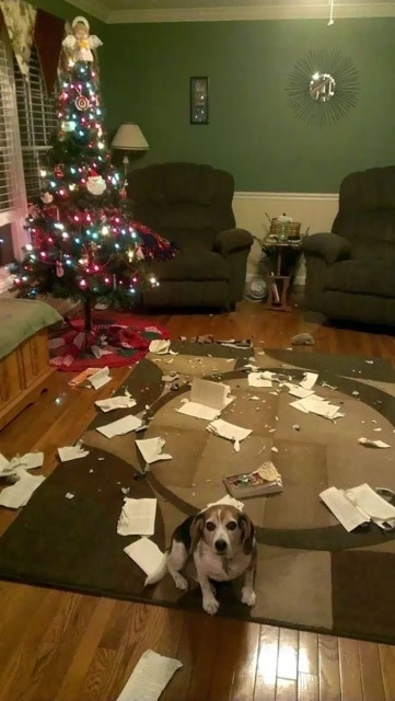 пес и елка