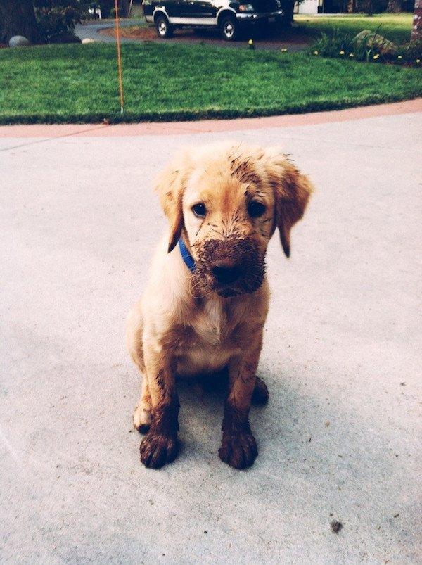 рыжий щенок с грязными лапами