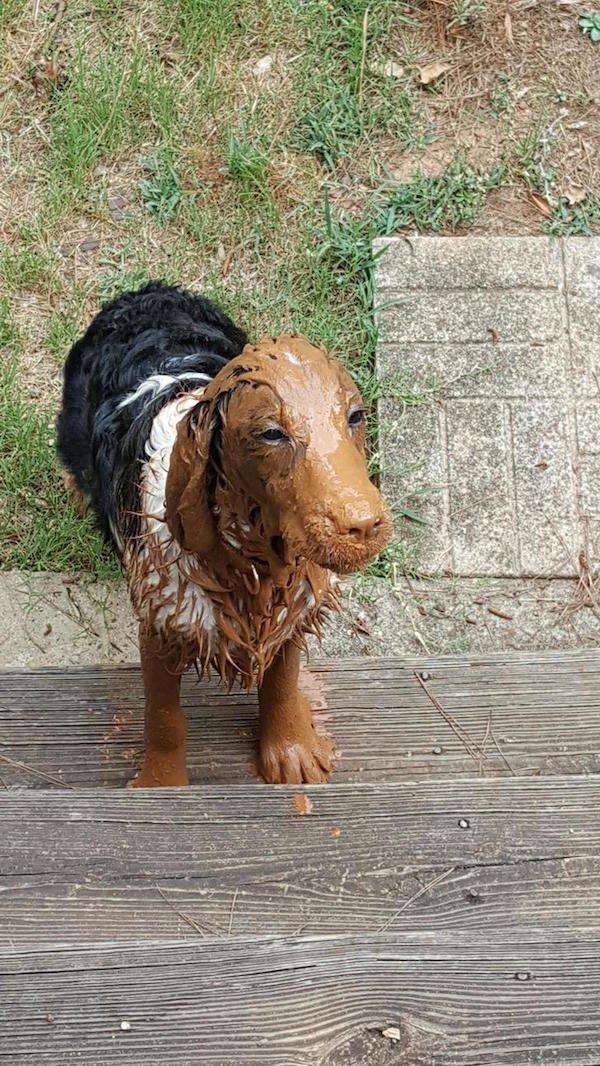 собака с грязью на морде