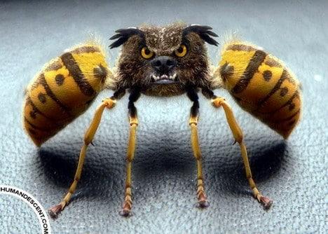 пчела фотошоп