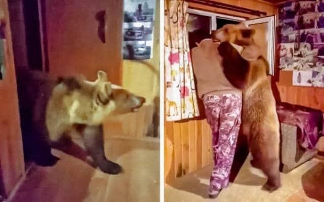 медведь в квартире
