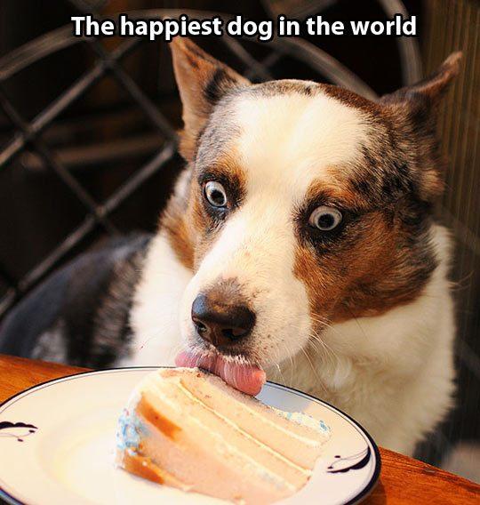 собака лижет торт