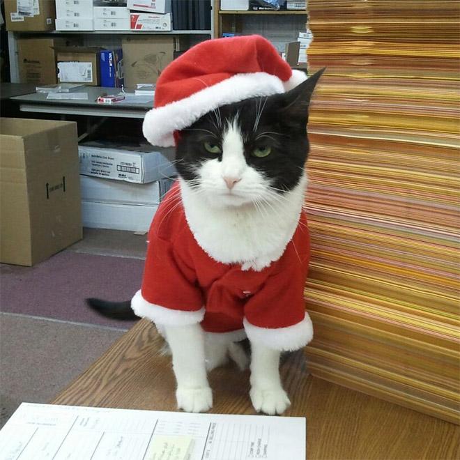 недовольный кот в костюме санты