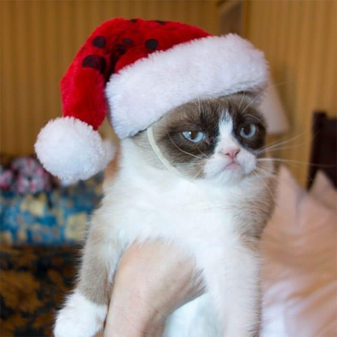 злой кот в зимней шапке