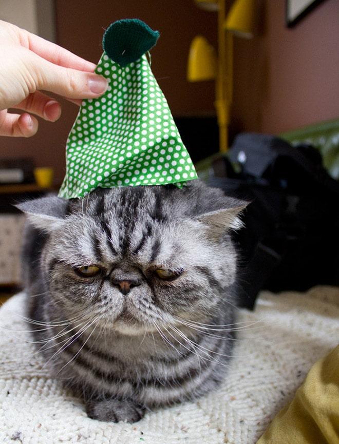 грустный серый кот