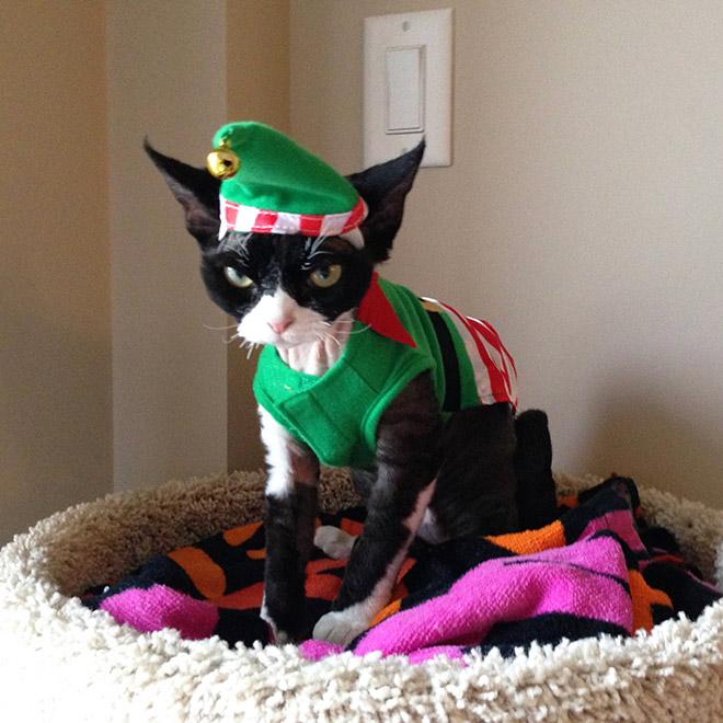злой кот в костюме эльфа