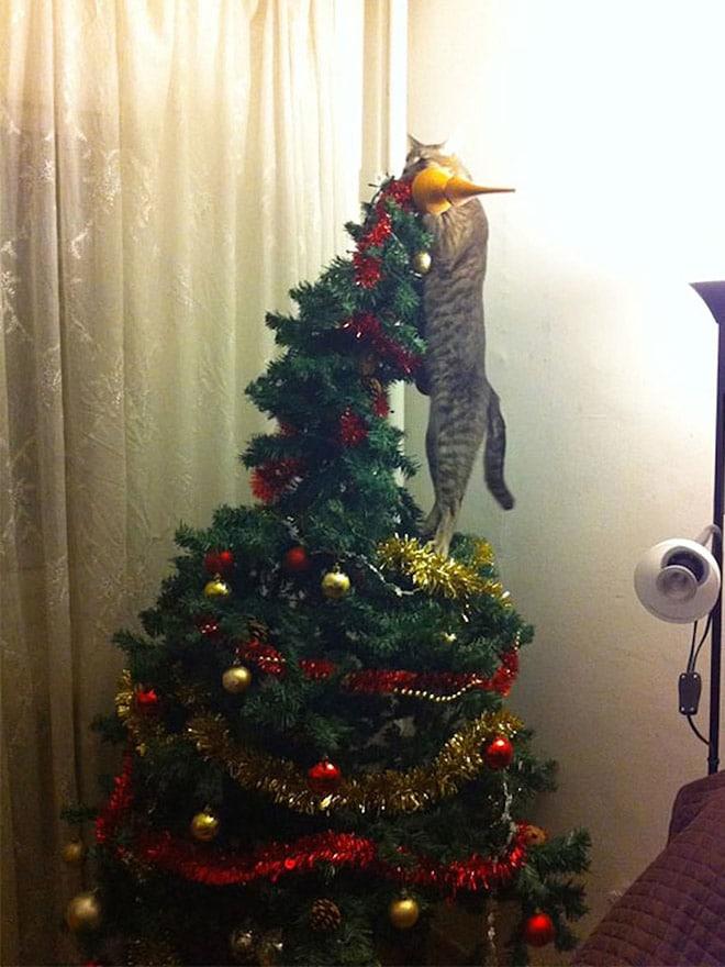 кот стоит на елке