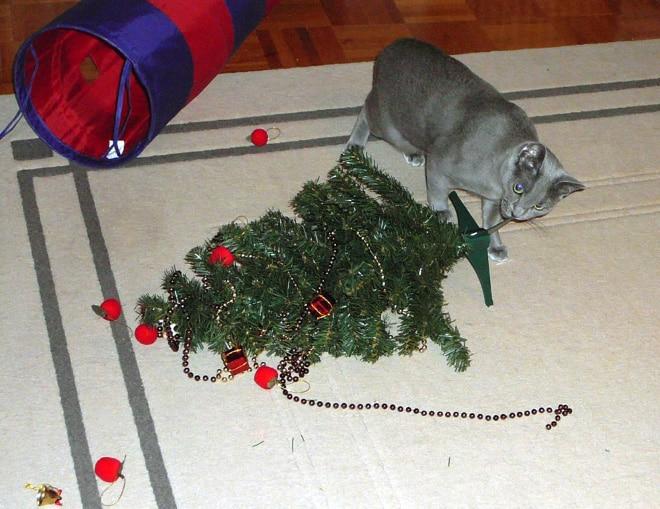 серый кот грызет елку