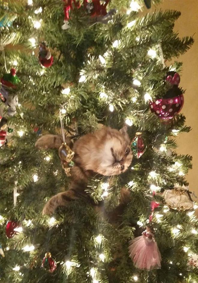 кот торчит из елки