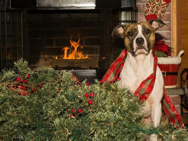 собака и перевернутая елка