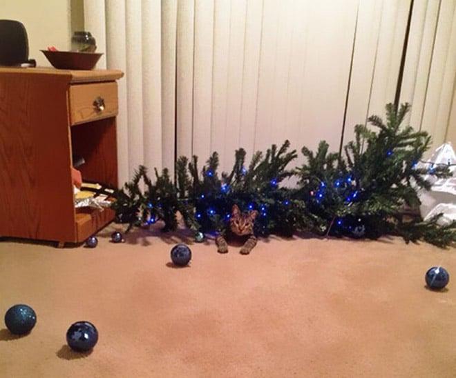 кот лежит под перевернутой елкой