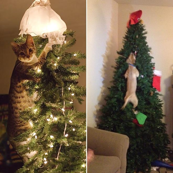 кот и собака висит на елке