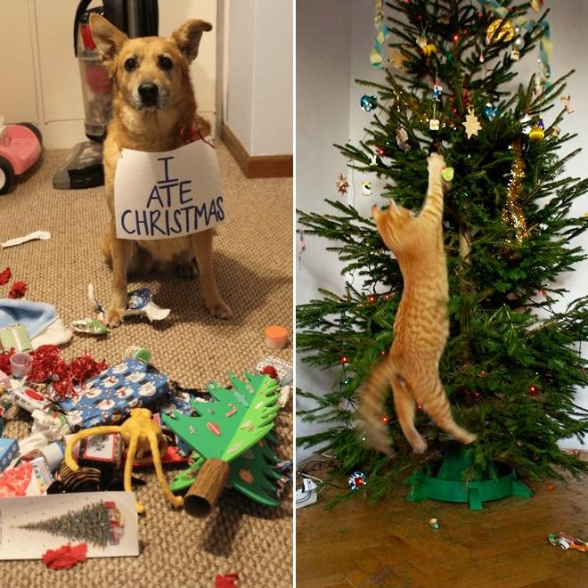 собака и кот с елкой