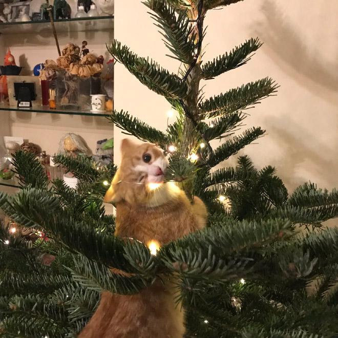 рыжий кот висит на елке
