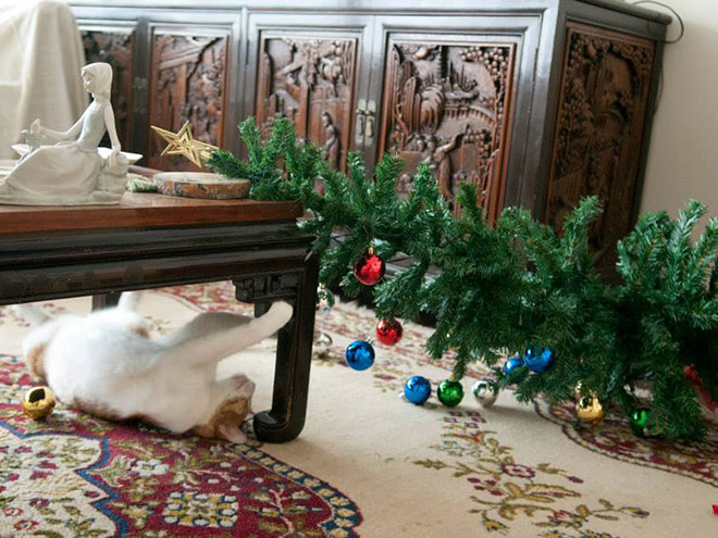 бело-рыжий кот и перевернутая елка