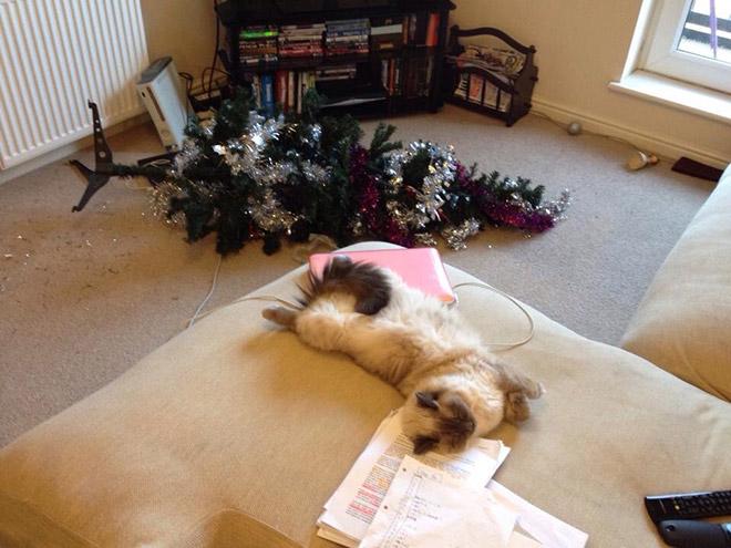 кошка спит рядом с перевернутой елкой