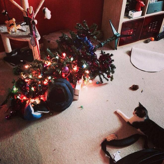 кот лежит рядом с перевернутой елкой