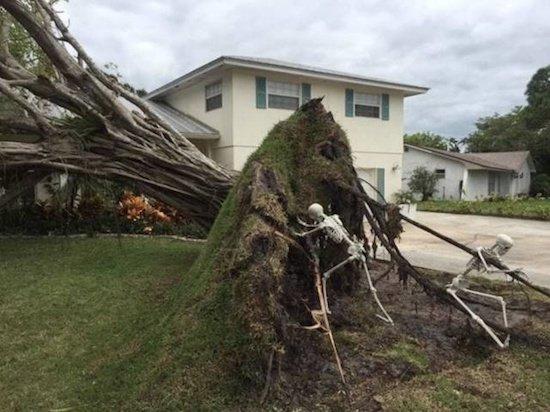 дерево вырвано с корнем