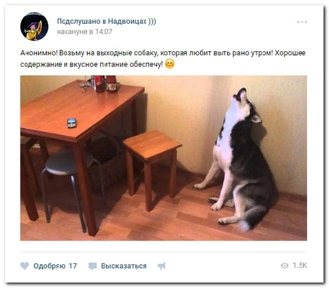 собака воет сидя на полу