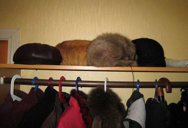 рыжий кот спит на полке с шапками
