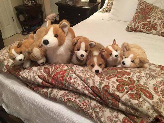 собака с игрушечными собаками на кровати