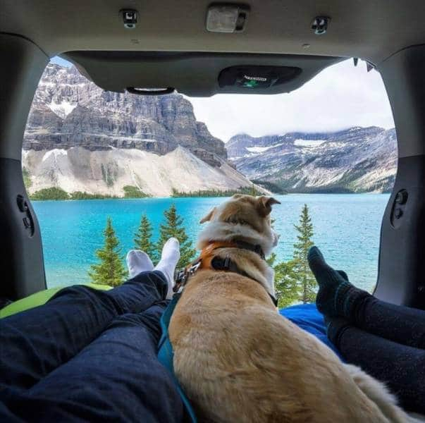 люди и собака в палатке