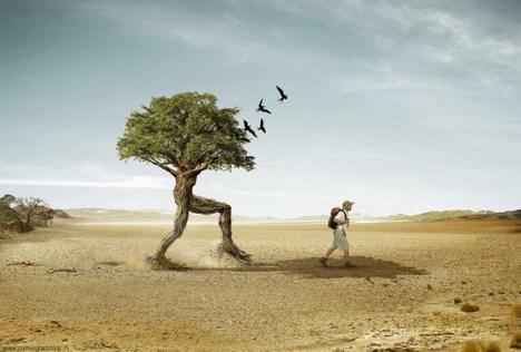 дерево идет за человеком