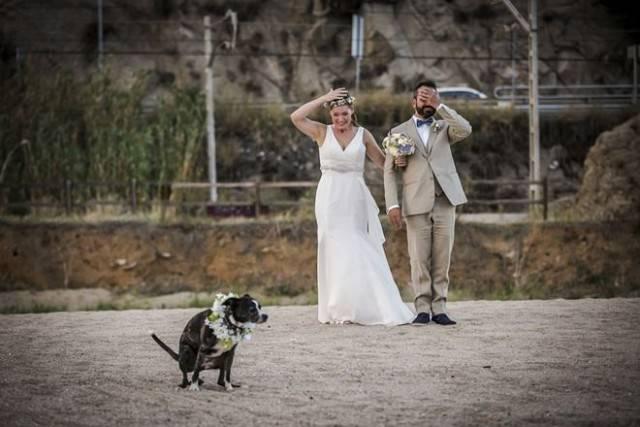жених и невеста на фоне пса